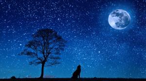 Dog howls at moon